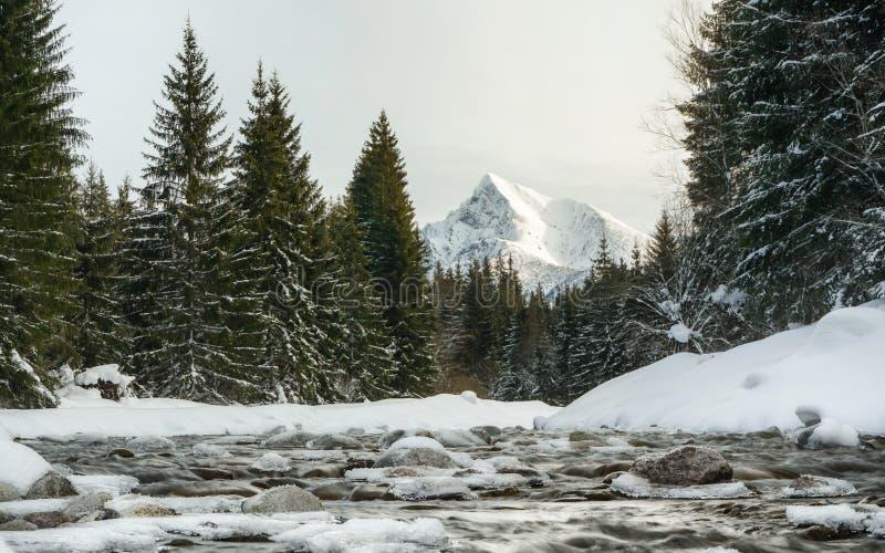Moringsscène - zet de de winter bosdierivier, stenen met ijs, naaldbomen aan beide kanten worden behandeld, het Slowaakse symboo stock afbeeldingen