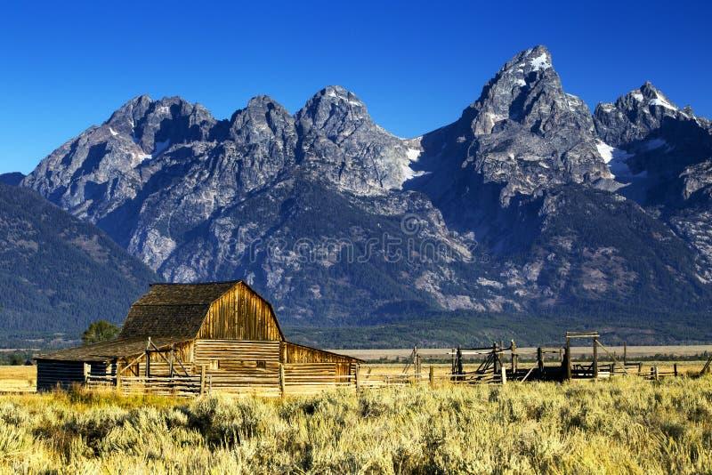 Mormonradladugård i Autumn Colors, storslagen Teton nationalpark, Wyoming royaltyfri bild