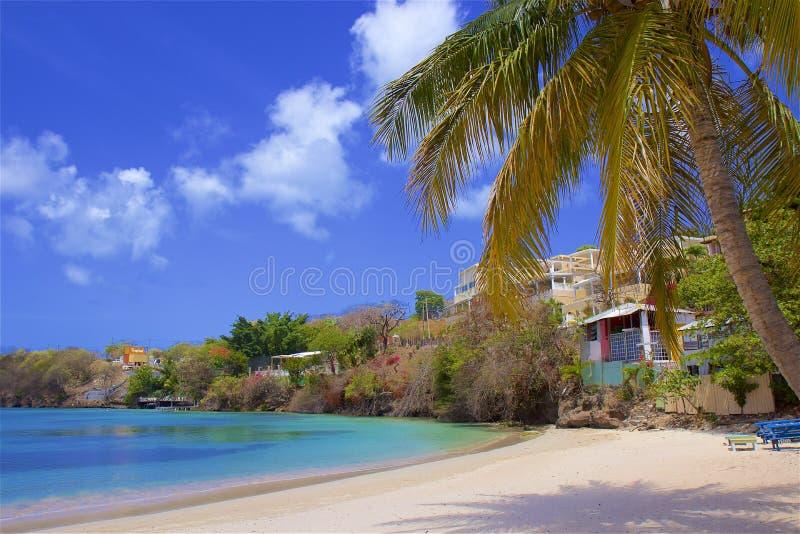 Morne Rouge strand i Grenada som ?r karibisk arkivfoto