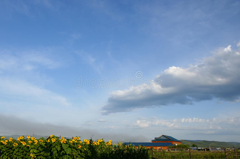 Download Morning stock photo. Image of sunflower, yellow, wind - 26262384