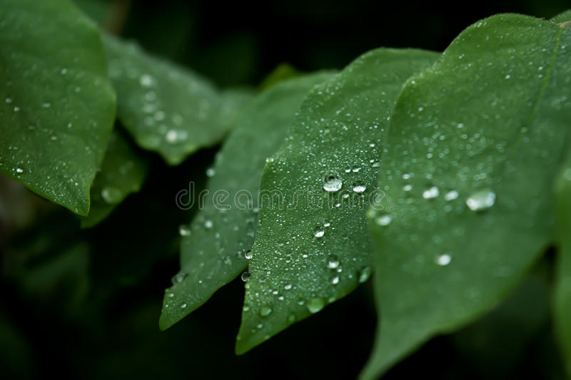 Drop of water on a blade of grass royalty free stock photography