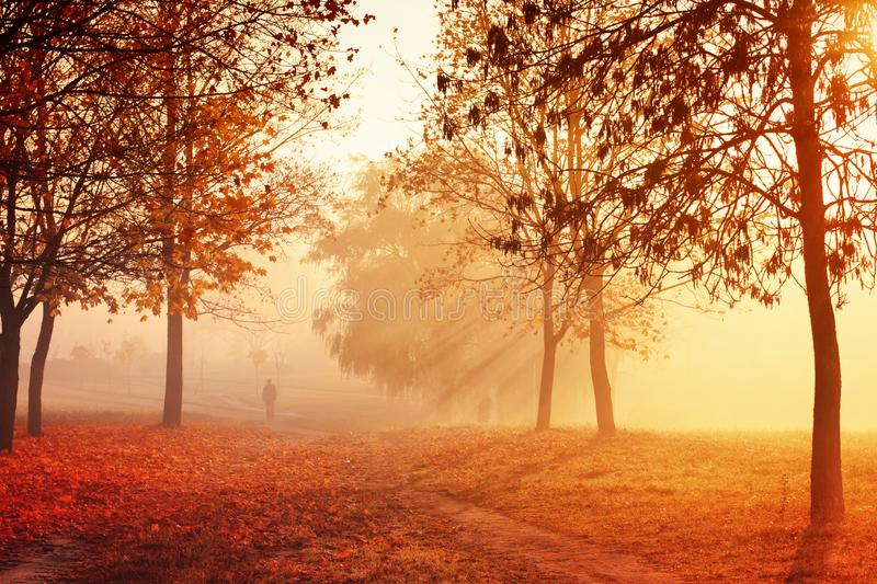 Morning autumn fog in shades of orange royalty free stock photography