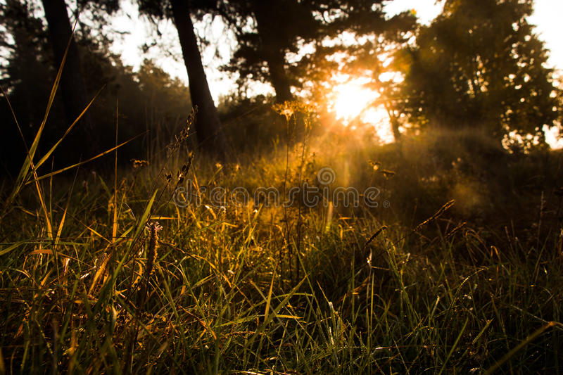Morning royalty free stock photography