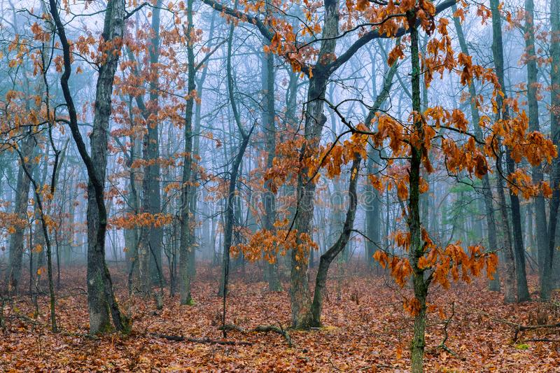 Morning in autumn forest trees and leaves of fantasy landscape stock photo