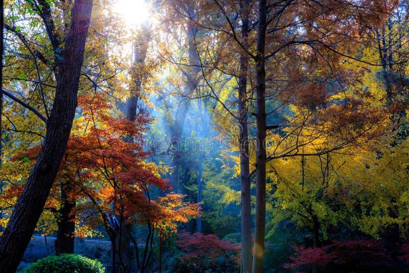 Morning in Autumn. Nanjing Qixia mountain in autumn stock photo