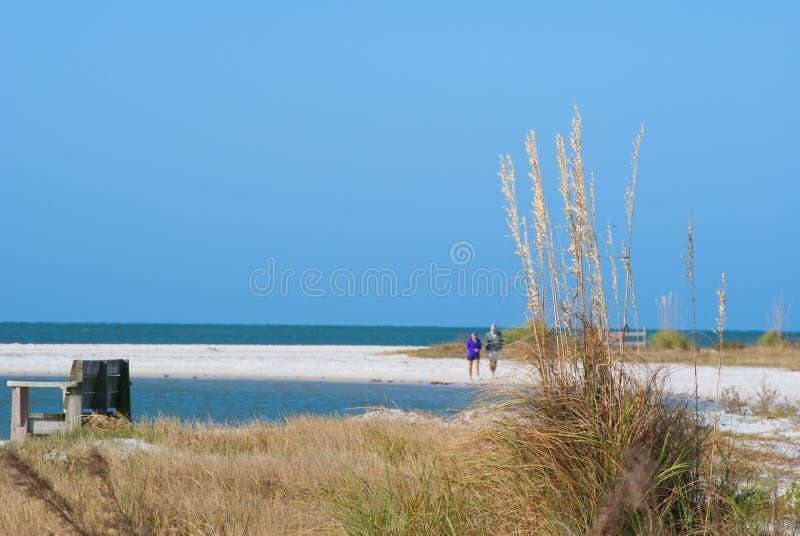 Morning beach sea oats royalty free stock image