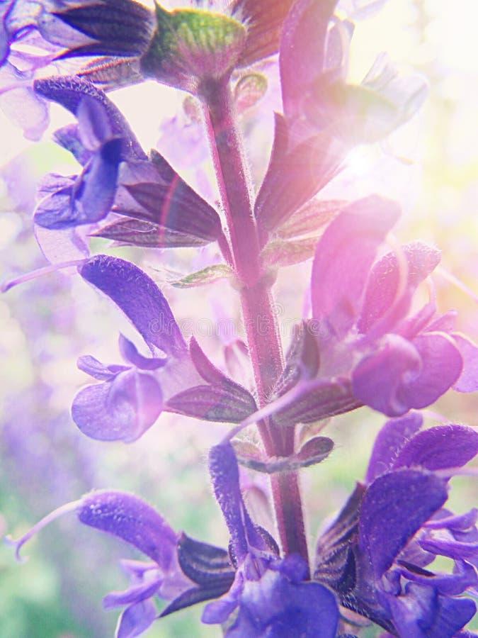 Morning Beauty stock photo