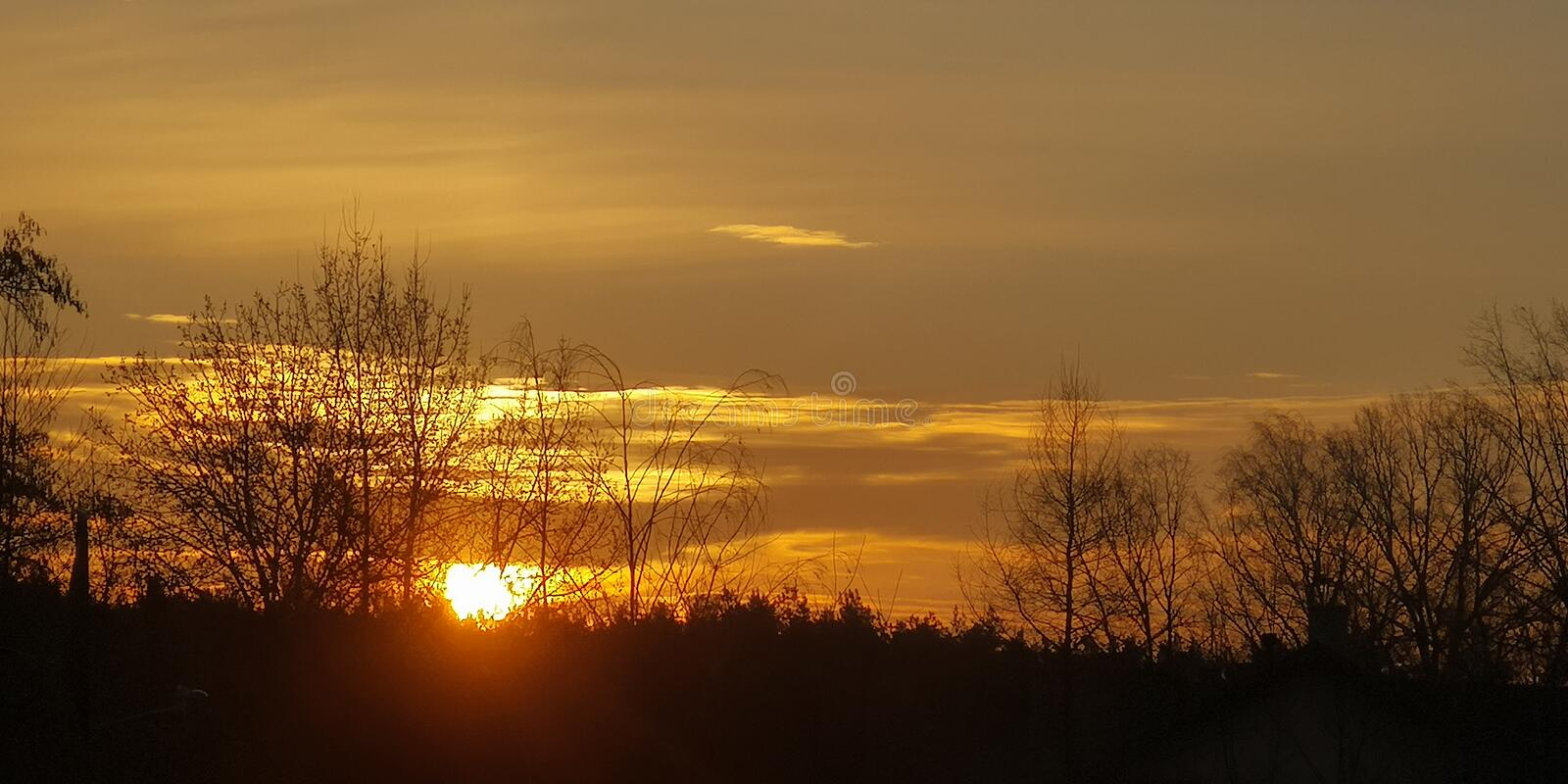 Morning. Bird on the background of the rising sun. Morning, sunrise. Bird on the background of the rising sun. Golden clouds royalty free stock images