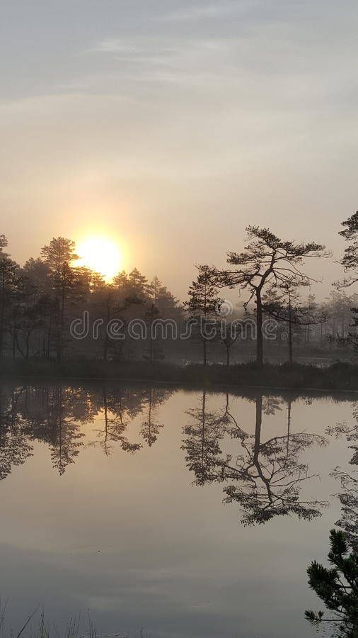 Download Morning in the bog stock photo. Image of calm, sunrise - 75291784