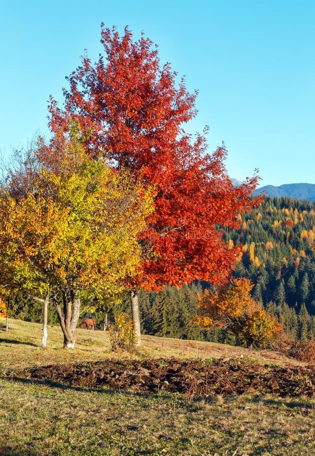 Autumn Carpathian village, Ukraine. royalty free stock image