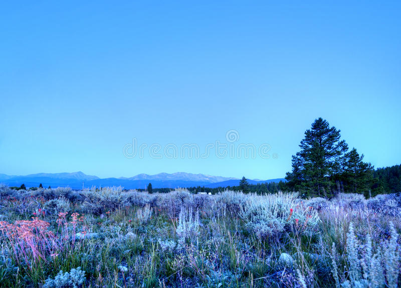 Morning in Colorado Rockies. With Wild Flowers royalty free stock photos