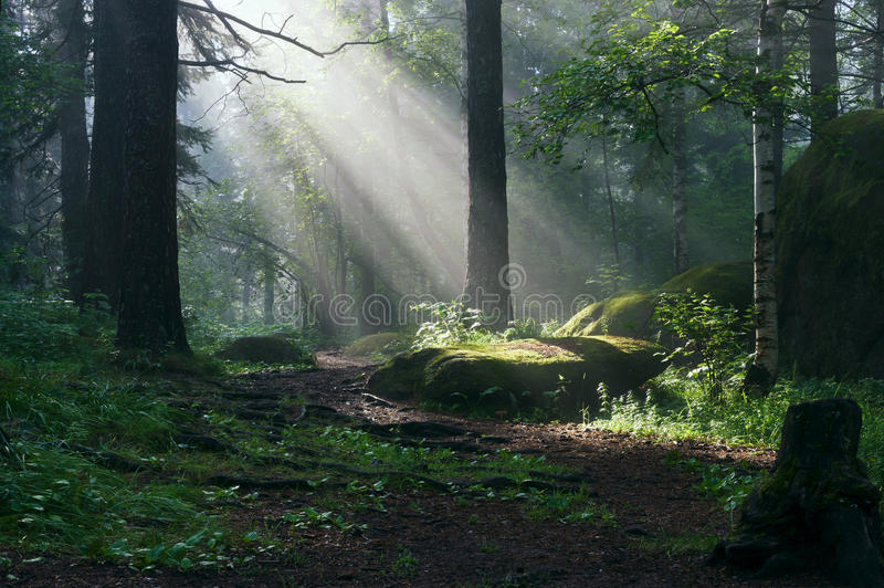 Morning in the deep forest royalty free stock photography