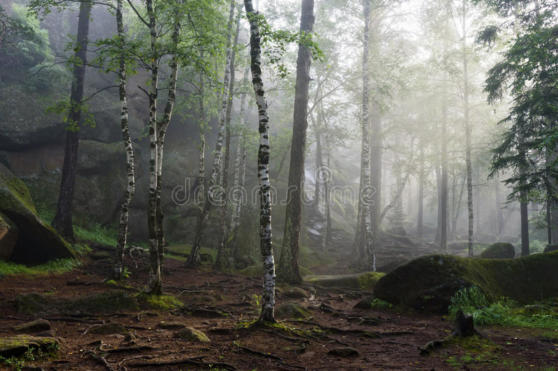 Morning in the deep forest stock photo