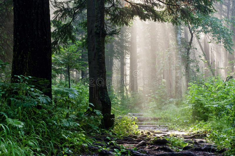 Morning in the deep forest stock photography