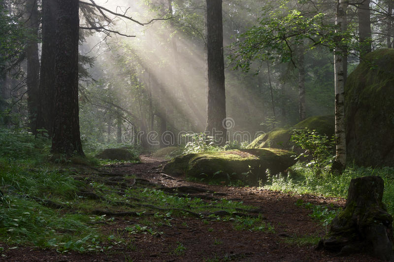 Morning in the deep forest stock images