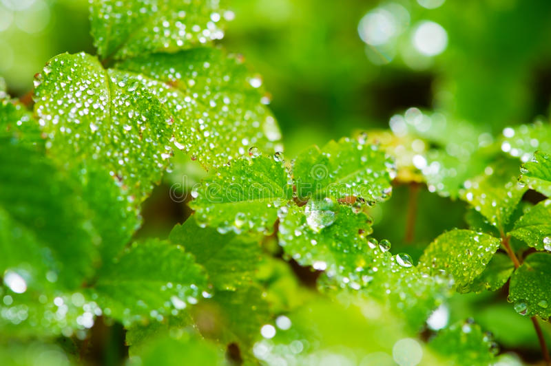 Download Morning Dew Royalty Free Stock Photo - Image: 27371895