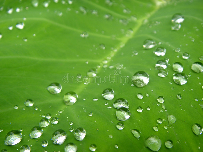 Download Morning dew stock photo. Image of tropical, plants, dews - 2826350