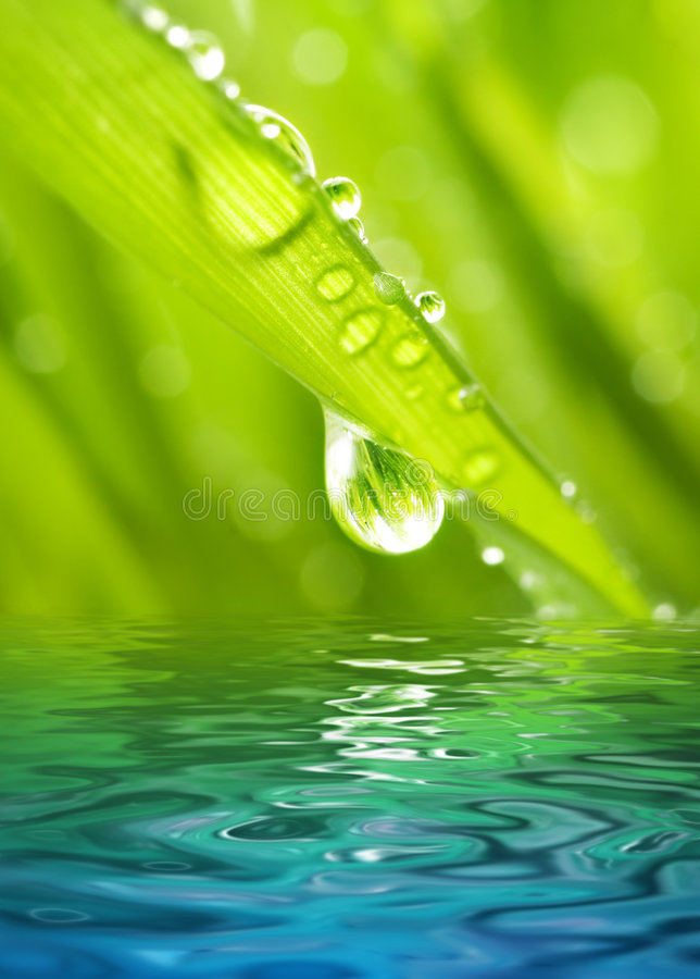 Download Morning dew stock image. Image of natural, morning, forest - 4883787