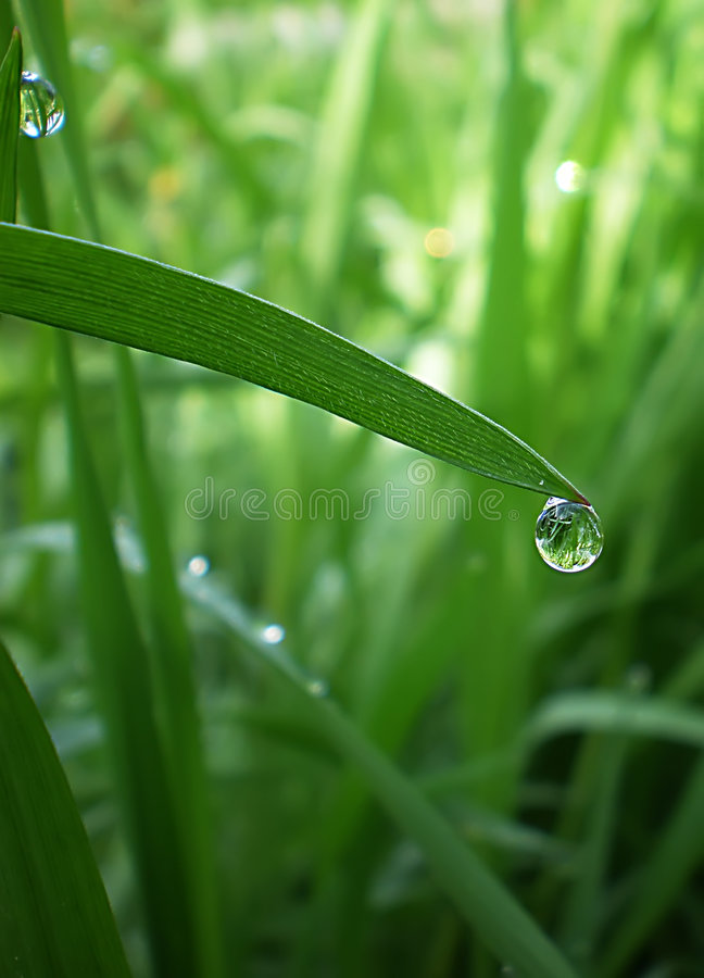 Dew-drop stock image  Image of bubble, grass, background