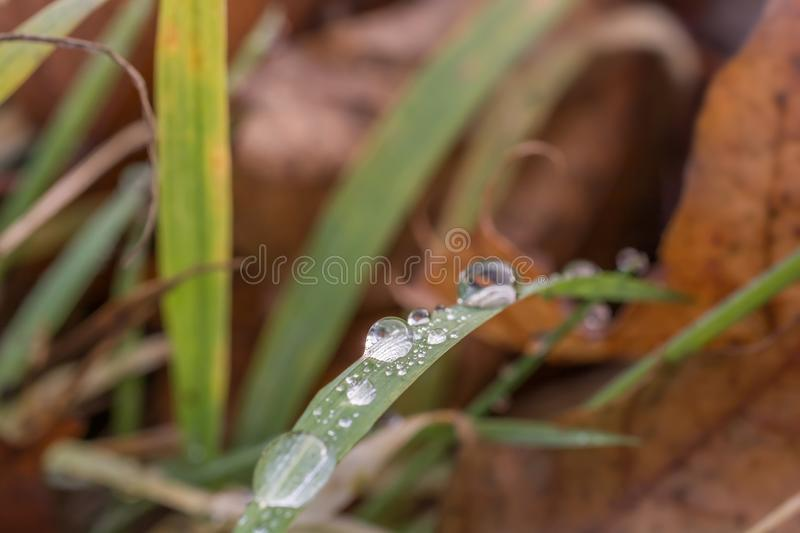 Morning dew on a blade of grass in the undergrowth stock photo