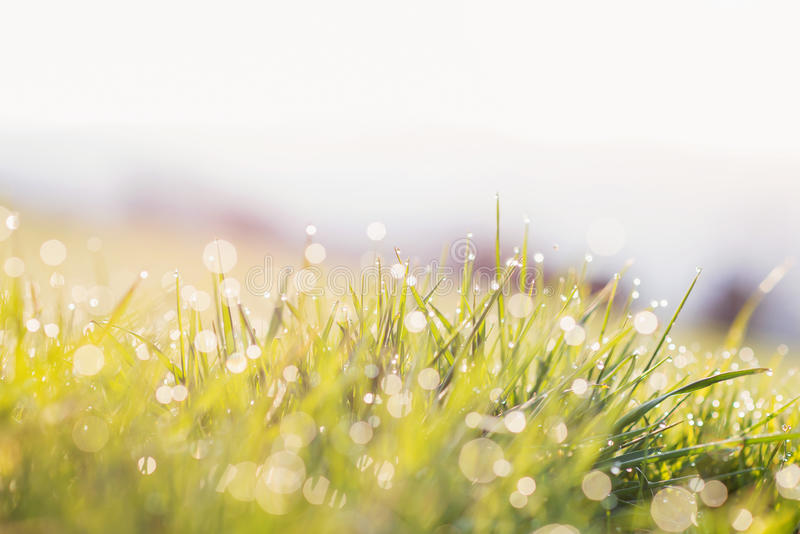 Morning dew drops on blades of green grass, sunrise stock photography