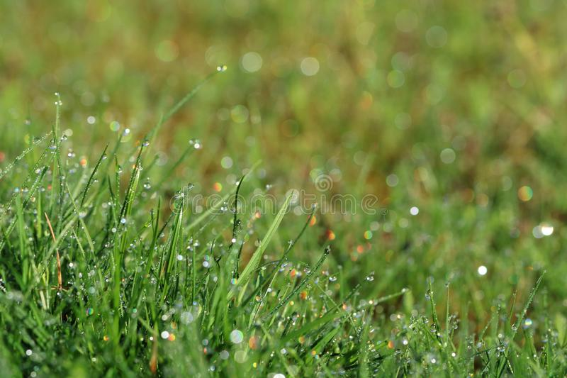 Morning dew drops with rainbow reflections on green blades of grass stock photos