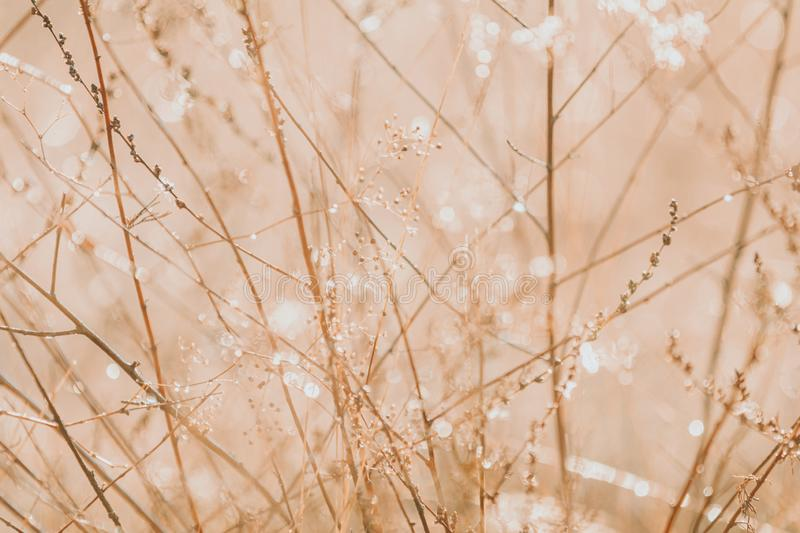 Morning dew on dry grass at the natural morning sunlight. Abstract fresh, autumn grass background with blurred bokeh lights effect. Shallow depth oh the fields royalty free stock image