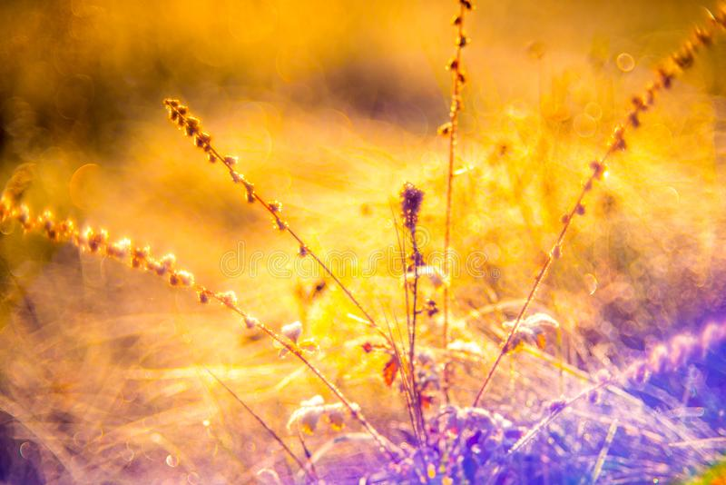 Morning dew and frost. In sunny wild meadow stock photo