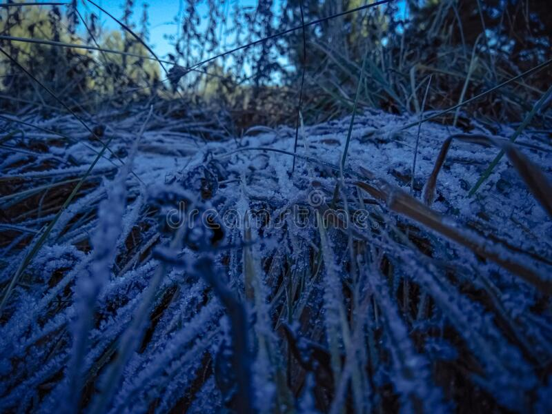 The morning dew froze on the grass. Grass in the field snow-covered after frost. Crystallized morning snow on the grass in autumn stock photo