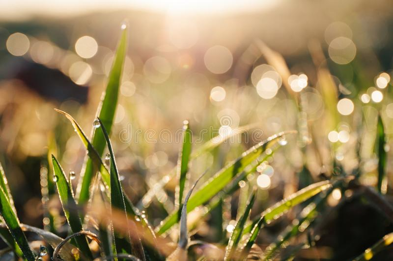 Morning dew on the grass in the sun stock photos