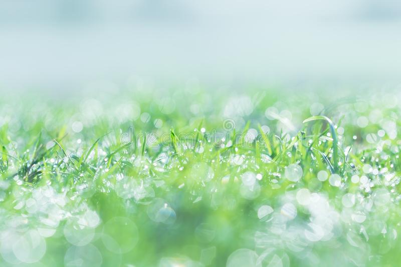 Morning dew on the lawn with water drop in the morning day.  stock photography