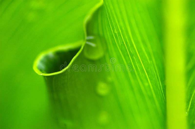 Morning dew on nature's circl stock image