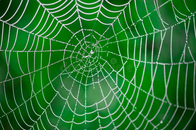 Download Morning Dew. Shining Water Drops On Spiderweb Stock Photo - Image: 26002806