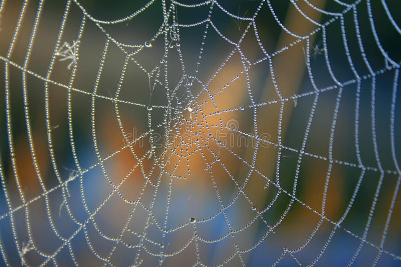 Download Morning dew on spider webs stock photo. Image of risk - 18691288