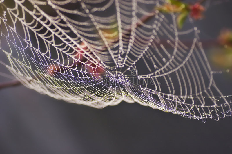 Download Morning Dew On Spiderweb Royalty Free Stock Photos - Image: 6651798