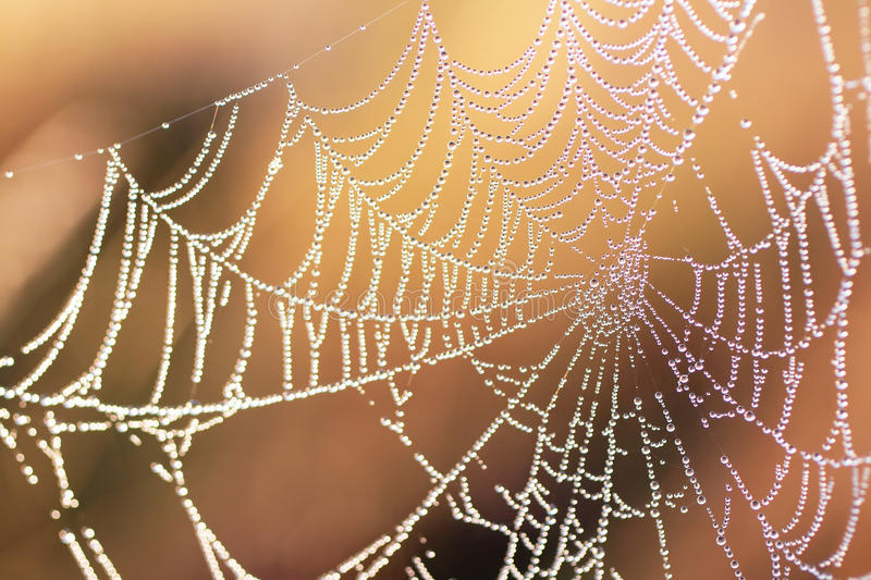 Download Morning dew on a web stock image. Image of pattern, background - 27248553