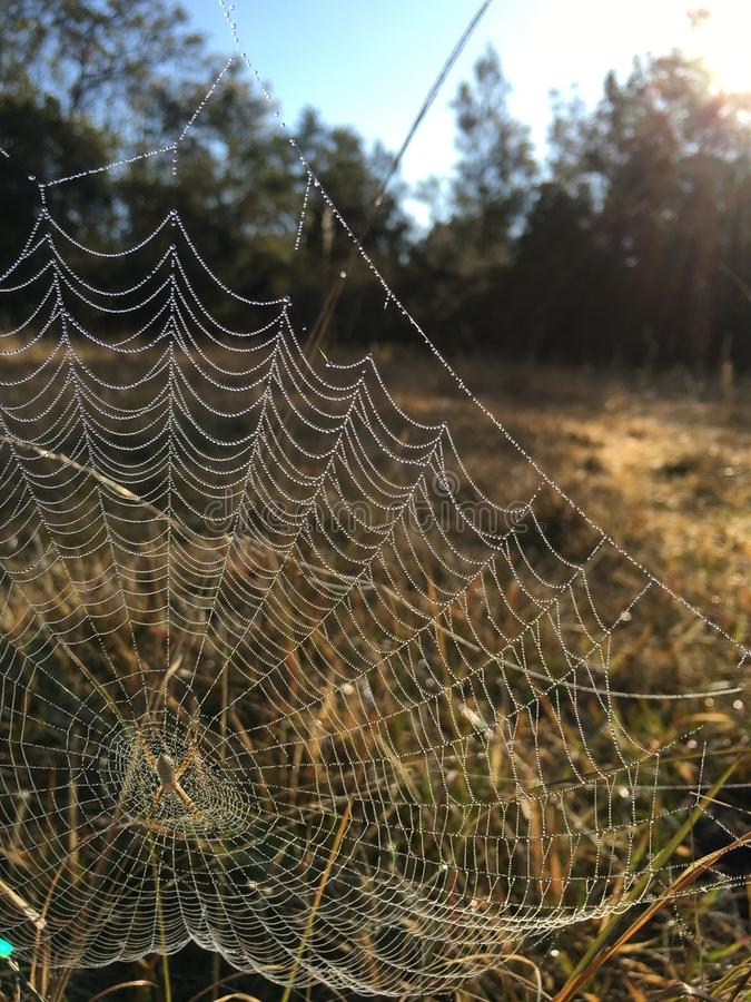 Morning dew on web stock image