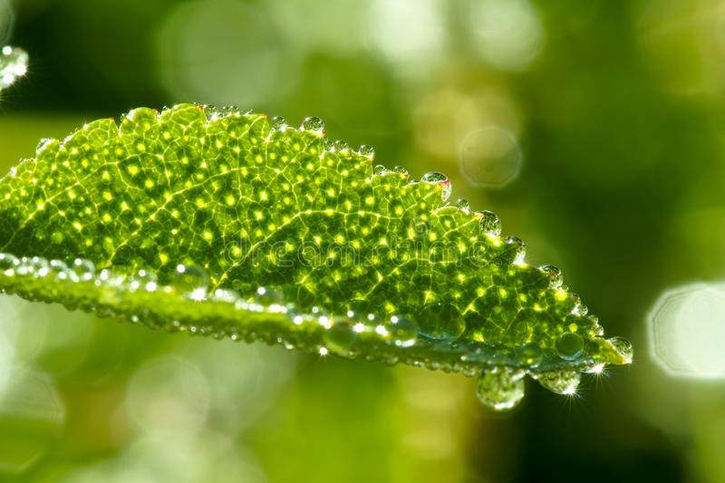Morning dewdrop royalty free stock image