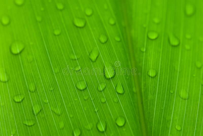 Morning dews on tropical flowers royalty free stock photography