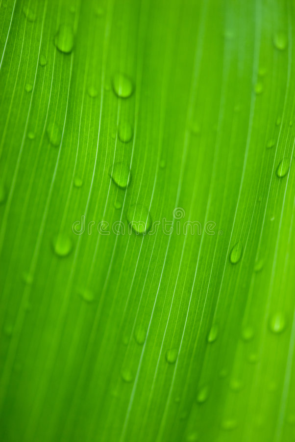 Morning dews on tropical flowers royalty free stock photos