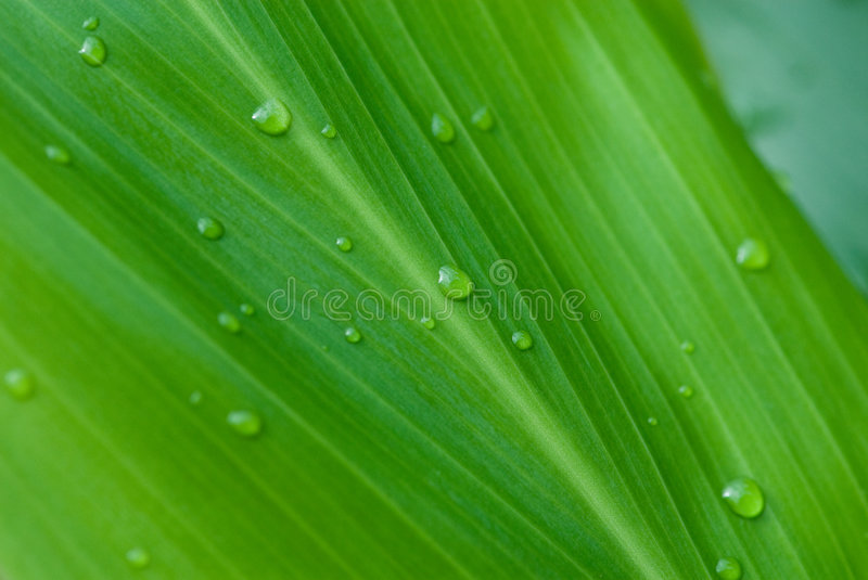 Morning dews on tropical flowers royalty free stock image