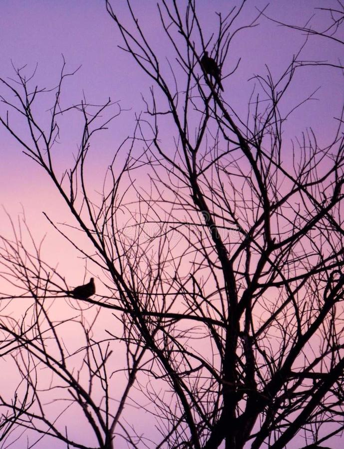 Morning Doves stock images