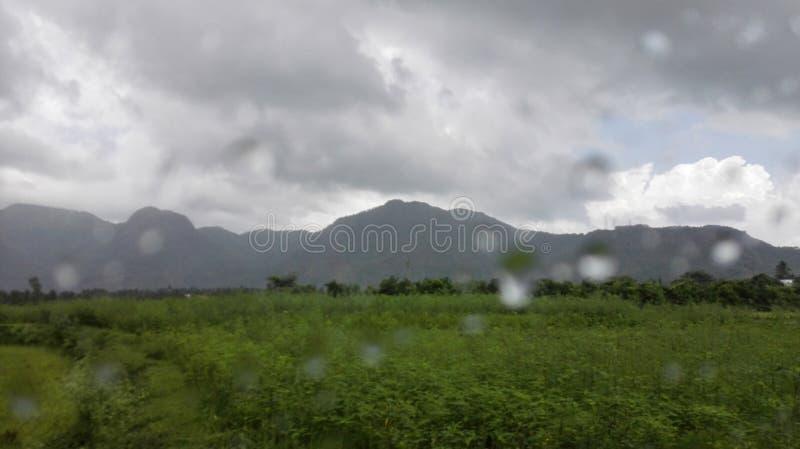Morning Droplets stock photos