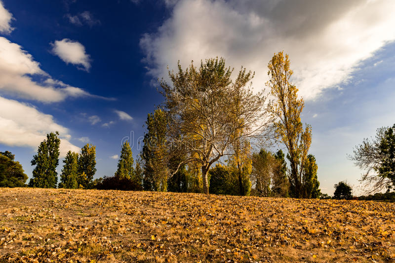 A morning fall. Beautiful colours in fall months stock photos