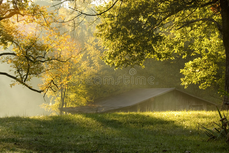 Morning on the farm. Sun rays through the fog on a October morning in rural Tennessee