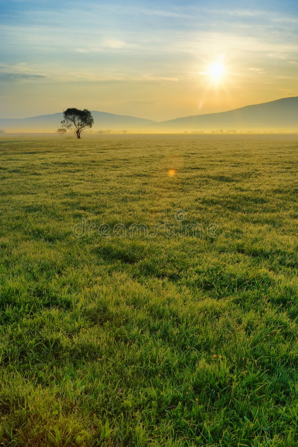 Morning field royalty free stock images