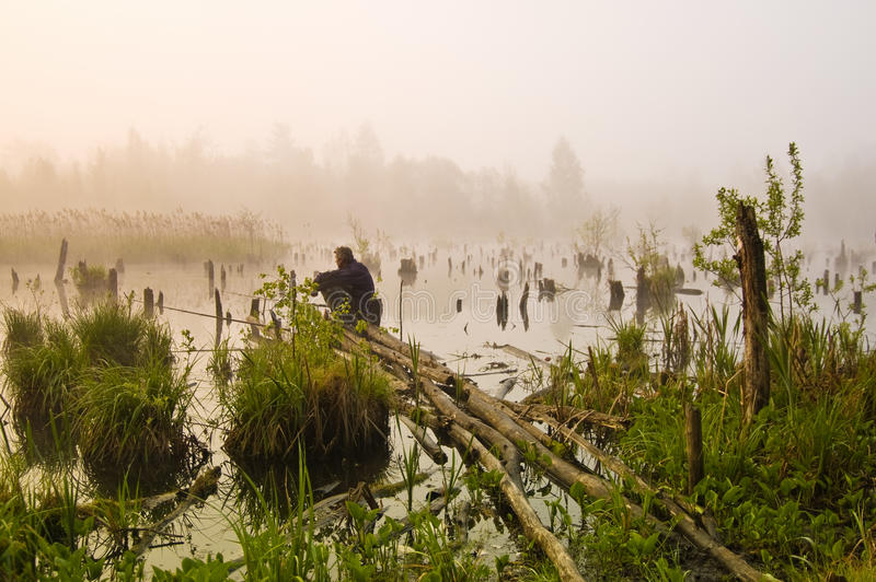 Morning fishing in the swamp stock photo