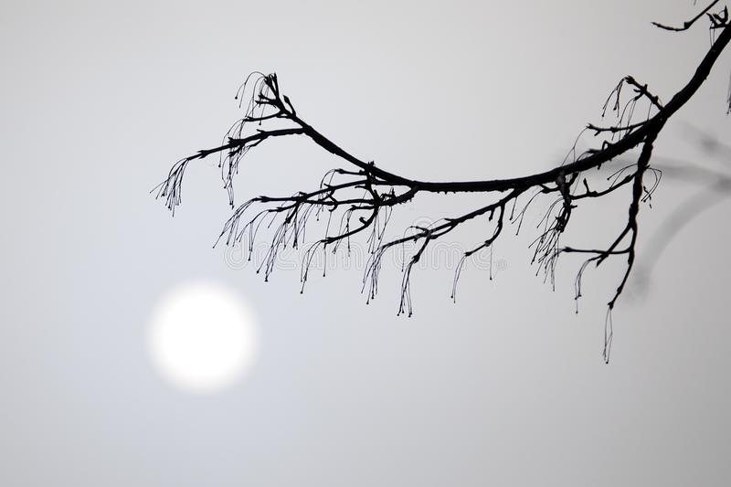Download Morning Fog stock photo. Image of tree, sunrise, silhouette - 22946680