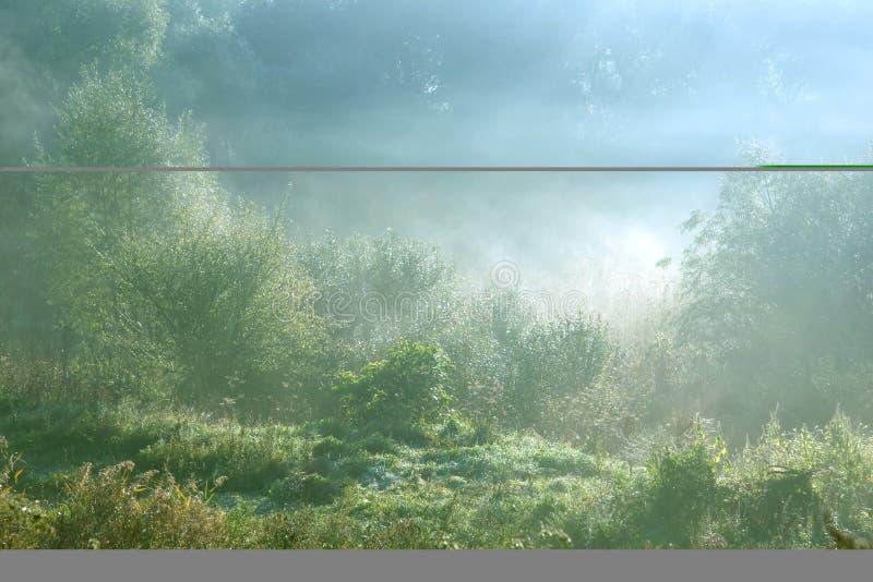 Morning fog stock photography