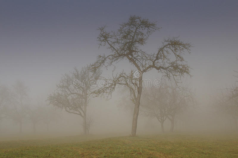 Download Morning Fog stock image. Image of outdoor, early, brown - 39621195